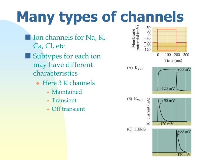 Ion channels for Na, K, Ca, Cl, etc