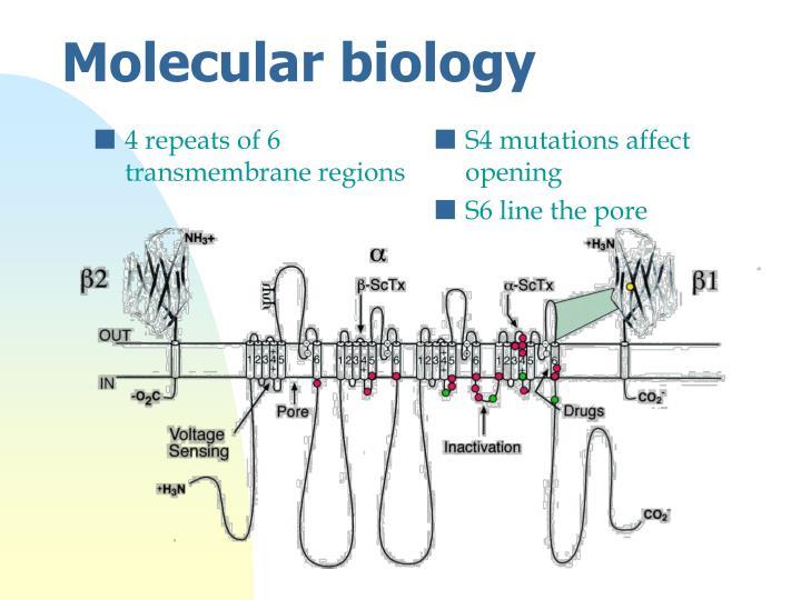 4 repeats of 6 transmembrane regions