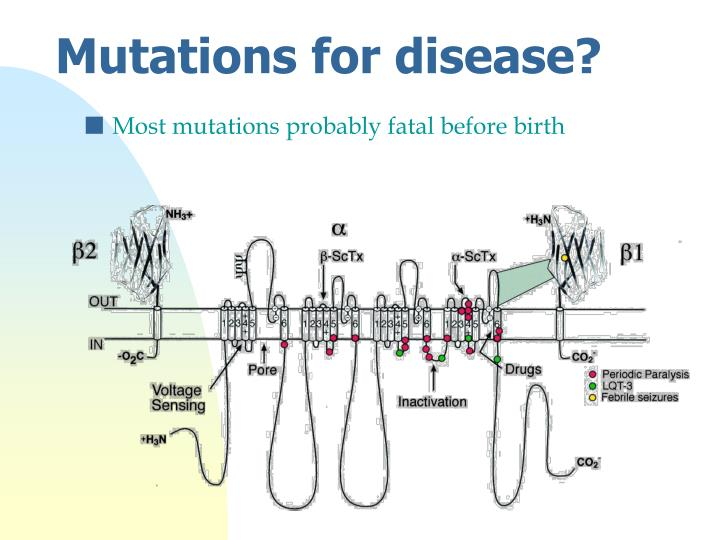 Most mutations probably fatal before birth