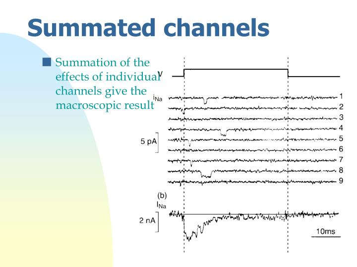Summation of the effects of individual channels give the macroscopic result
