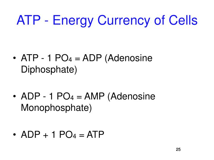 ATP - Energy Currency of Cells