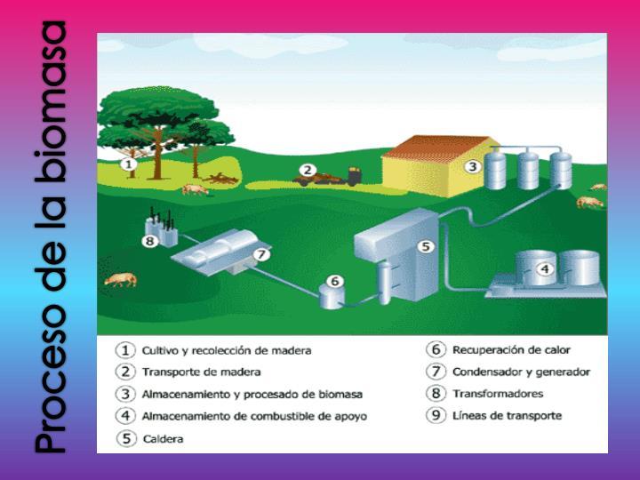 Proceso de la biomasa