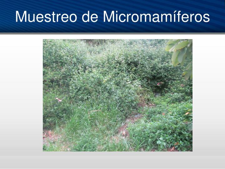 Muestreo de Micromamíferos