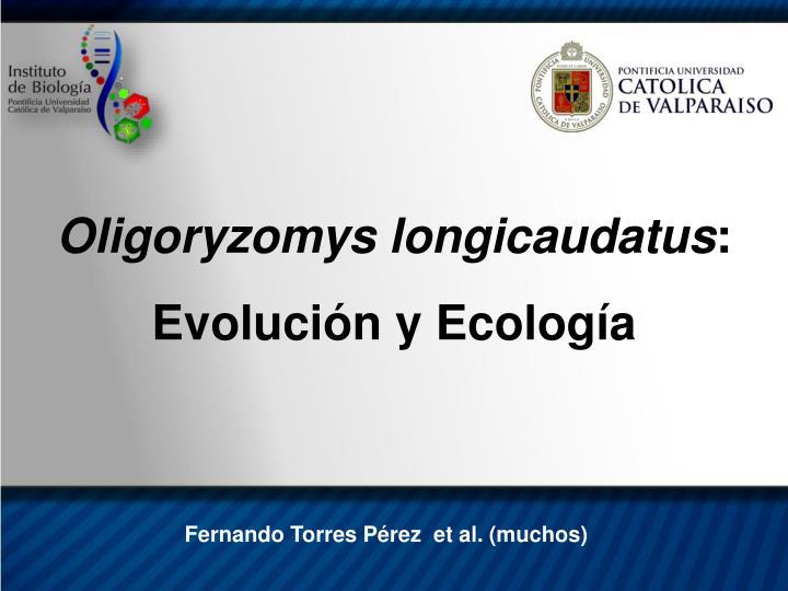 Oligoryzomys longicaudatus