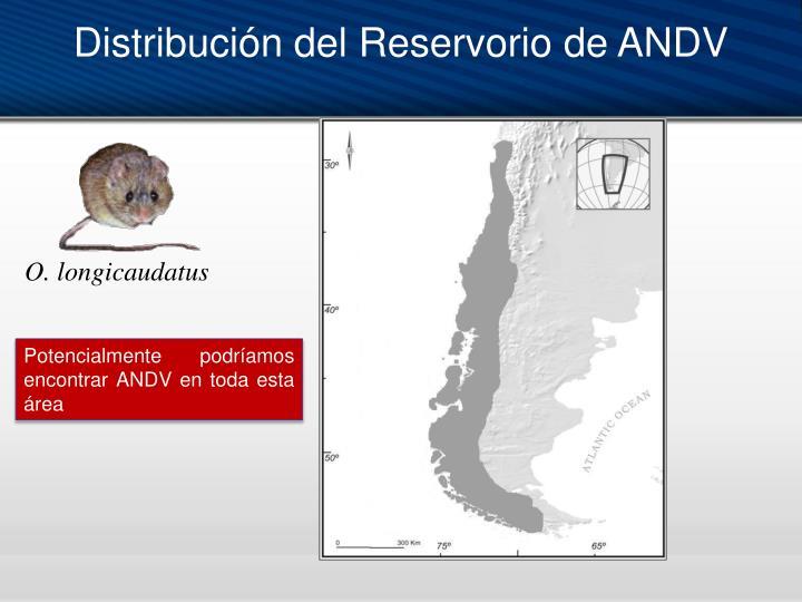 Distribución del Reservorio de ANDV