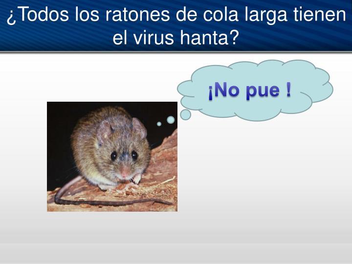 ¿Todos los ratones de cola larga tienen el virus hanta?