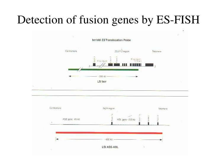 Detection of fusion genes by ES-FISH