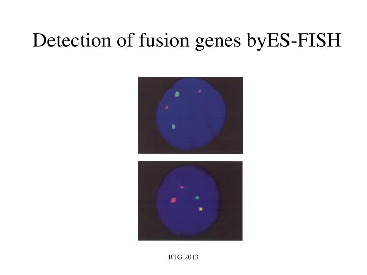 Detection of fusion genes byES-FISH