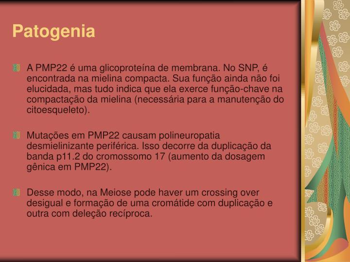 Patogenia