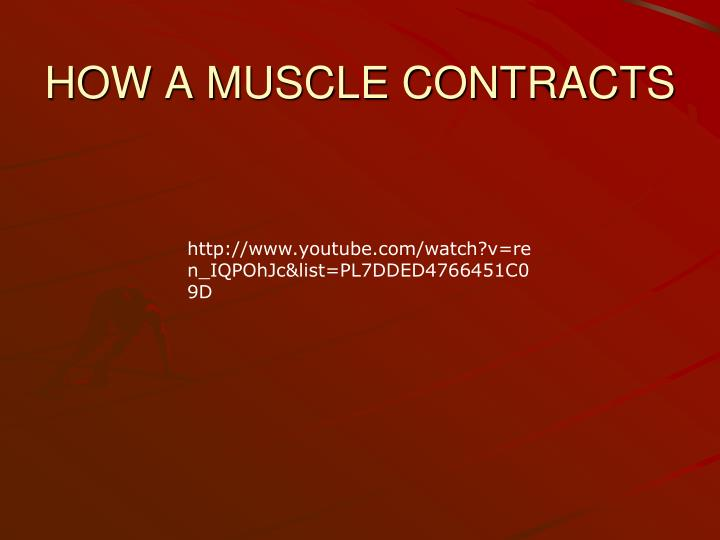HOW A MUSCLE CONTRACTS