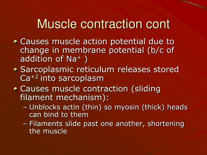 Muscle contraction cont