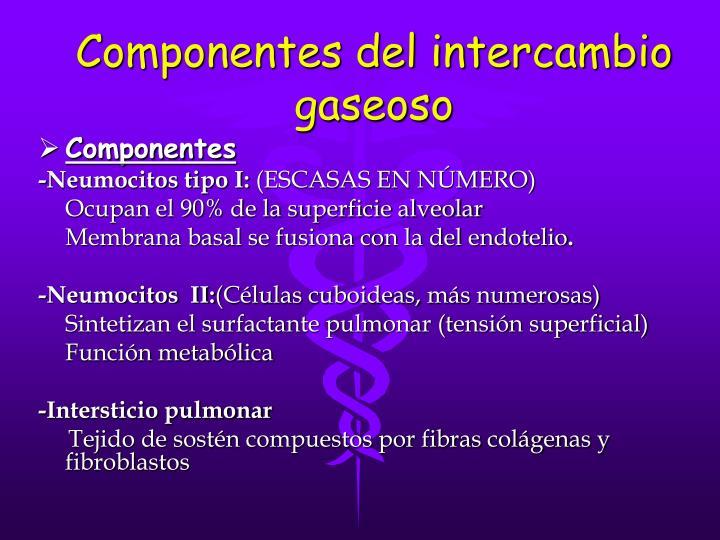 Componentes del intercambio gaseoso