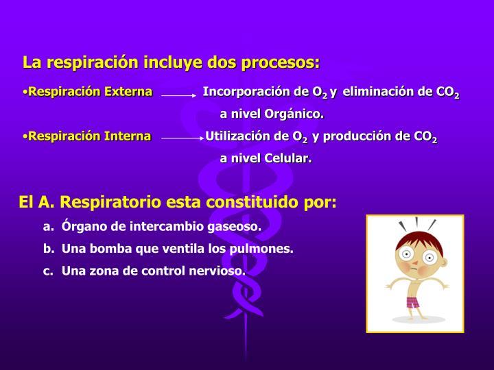 La respiración incluye dos procesos: