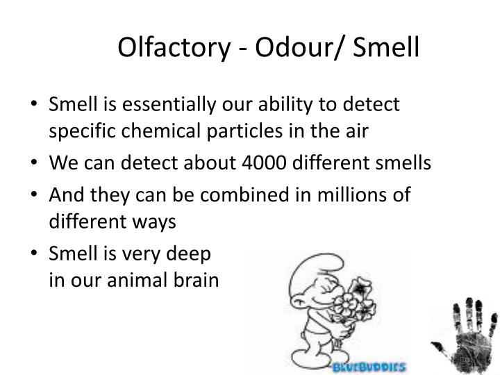 Olfactory - Odour/ Smell