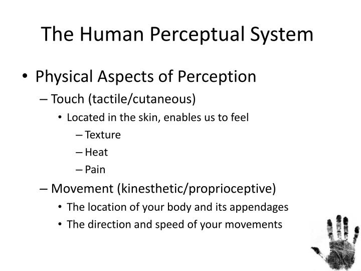 The human perceptual system
