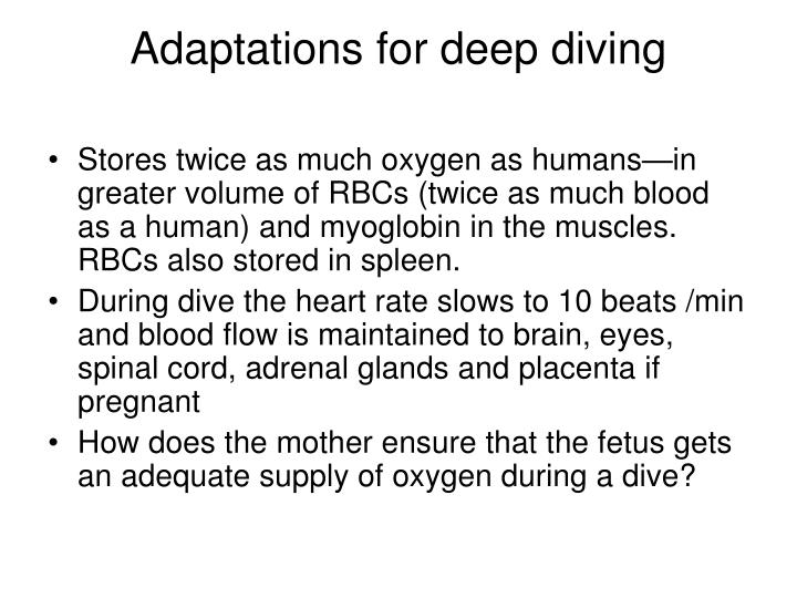 Adaptations for deep diving