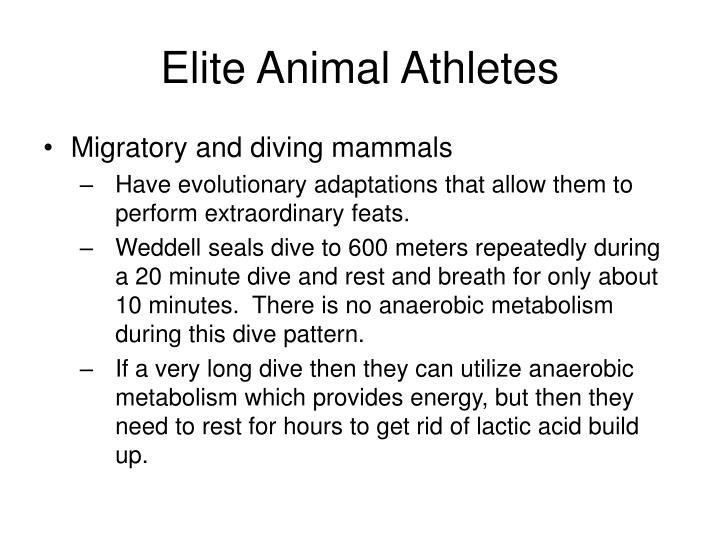 Elite Animal Athletes