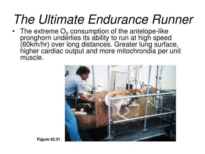 The Ultimate Endurance Runner
