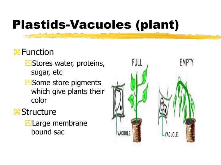 Plastids-Vacuoles (plant)