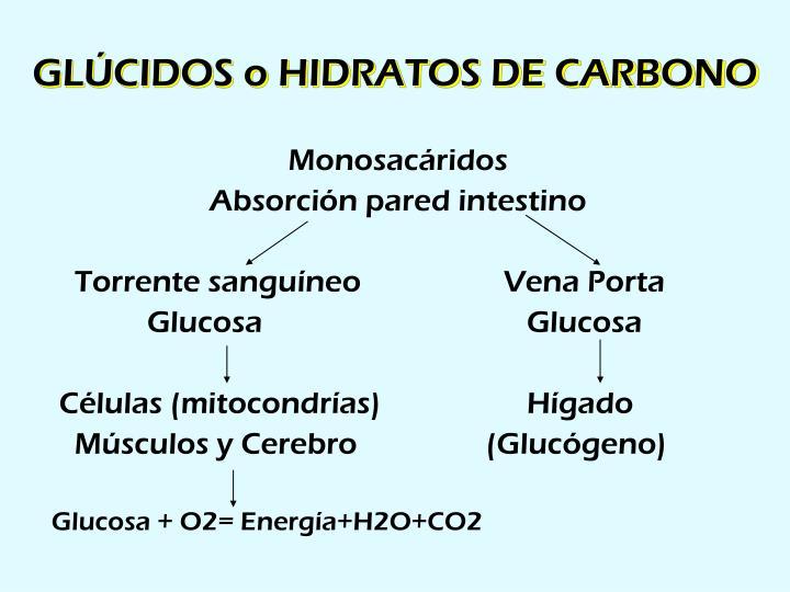 GLÚCIDOS o HIDRATOS DE CARBONO