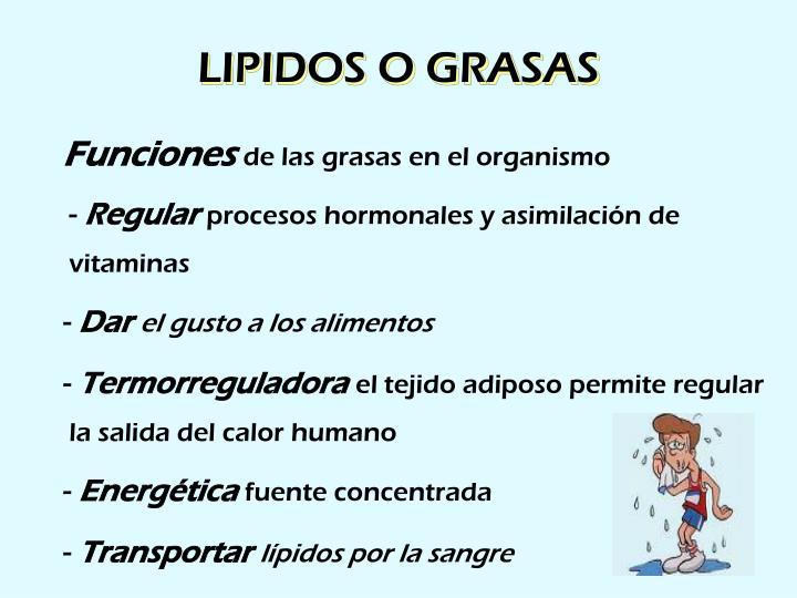 LIPIDOS O GRASAS