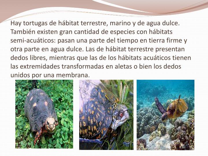 Hay tortugas de hábitat terrestre, marino y de agua dulce. También existen gran cantidad de especies con hábitats