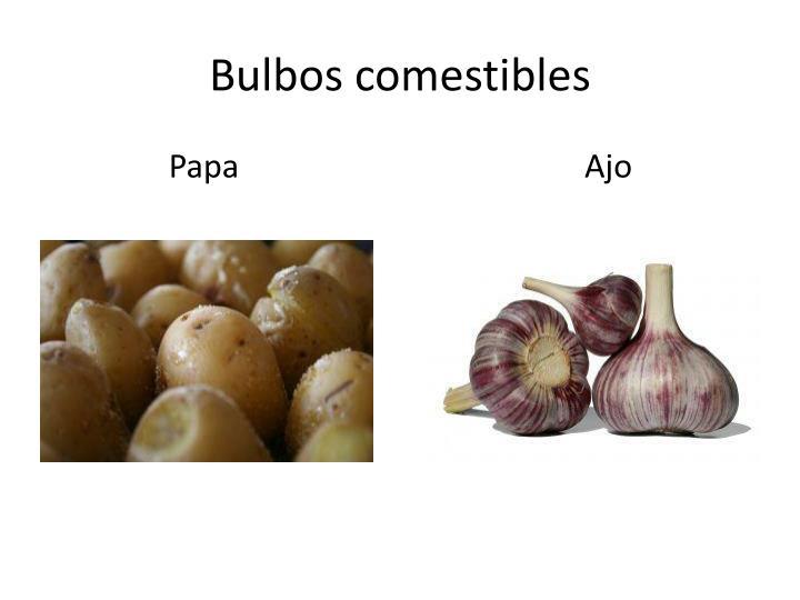 Bulbos comestibles