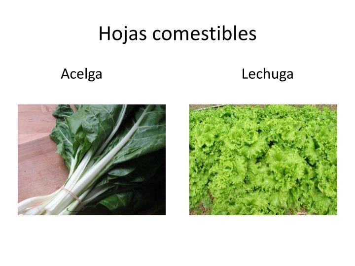 Hojas comestibles