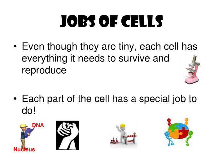 Jobs of cells
