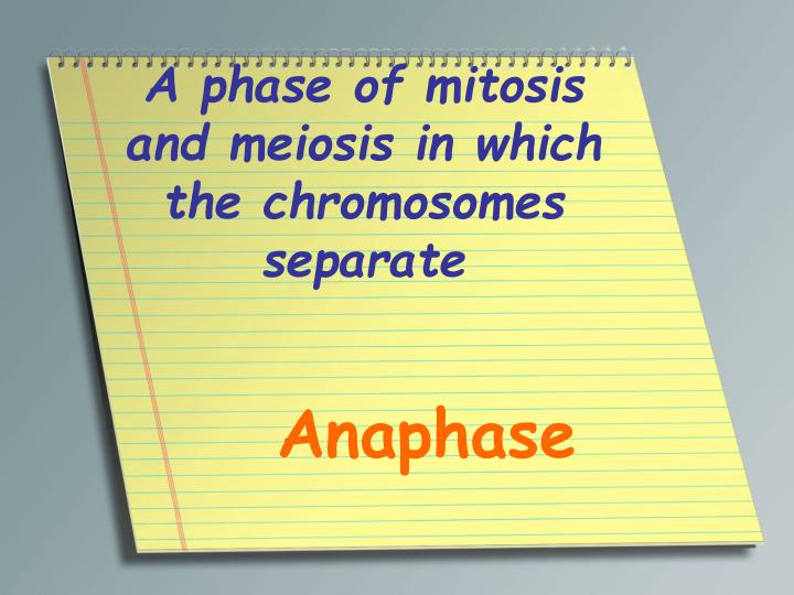 A phase of mitosis and meiosis in which the chromosomes separate