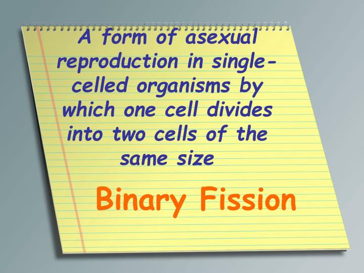 A form of asexual reproduction in single-celled organisms by which one cell divides into two cells of the same size