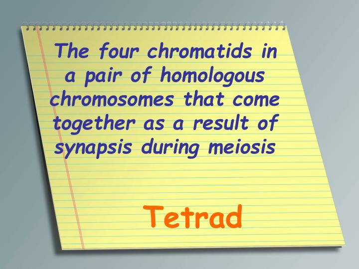 The four chromatids in a pair of homologous chromosomes that come together as a result of synapsis during meiosis