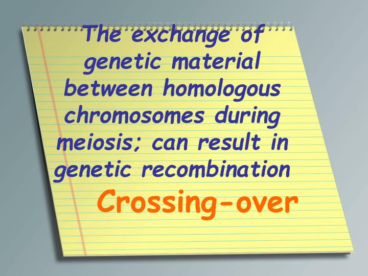 The exchange of genetic material between homologous chromosomes during meiosis; can result in genetic recombination