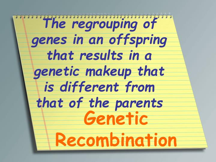 The regrouping of genes in an offspring that results in a genetic makeup that is different from that of the parents
