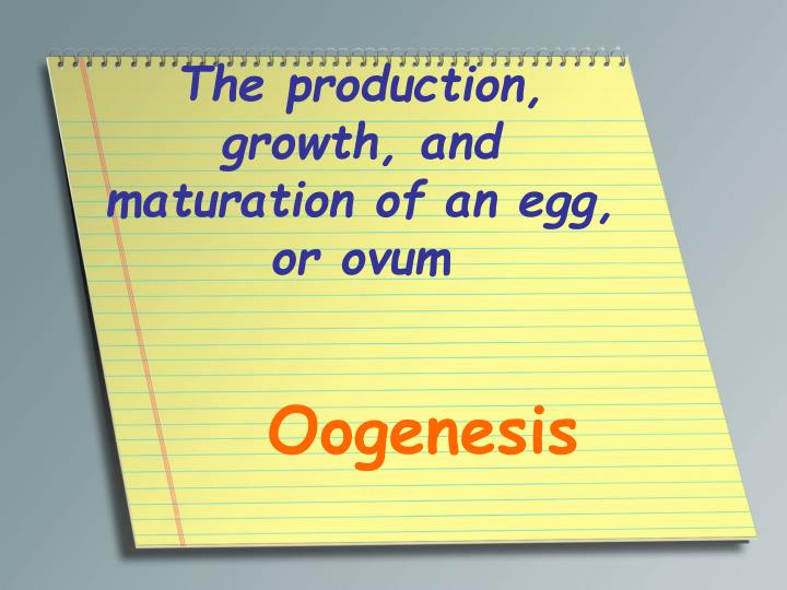 The production, growth, and maturation of an egg, or ovum