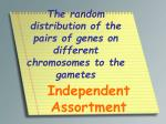 the random distribution of the pairs of genes on different chromosomes to the gametes