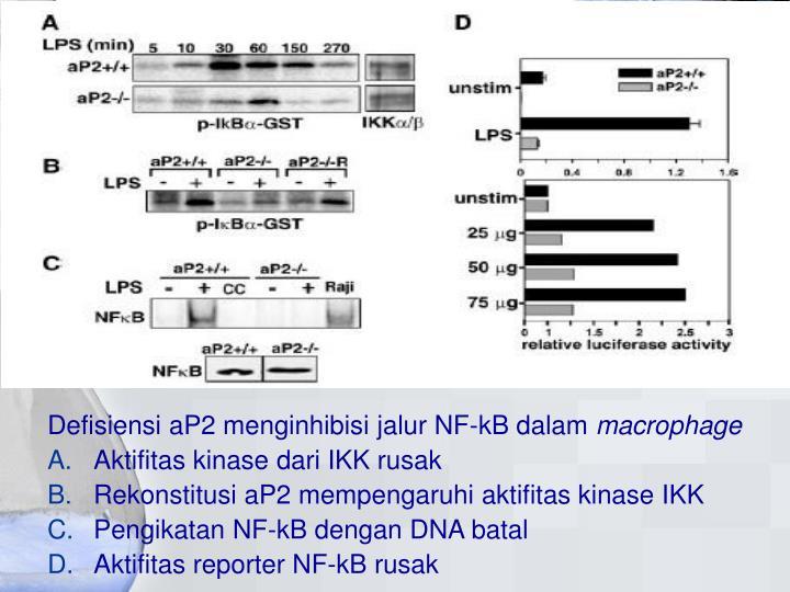 Defisiensi aP2 menginhibisi jalur NF-kB dalam