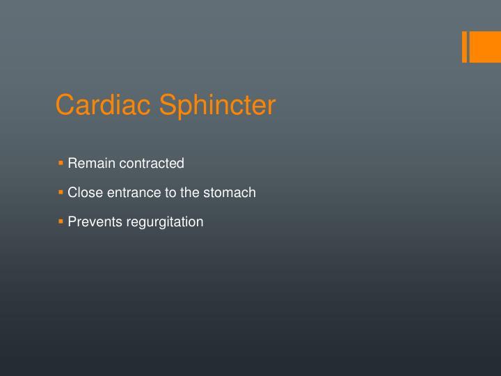 Cardiac Sphincter