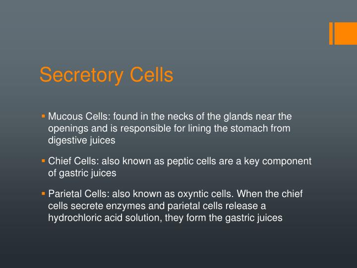 Secretory Cells