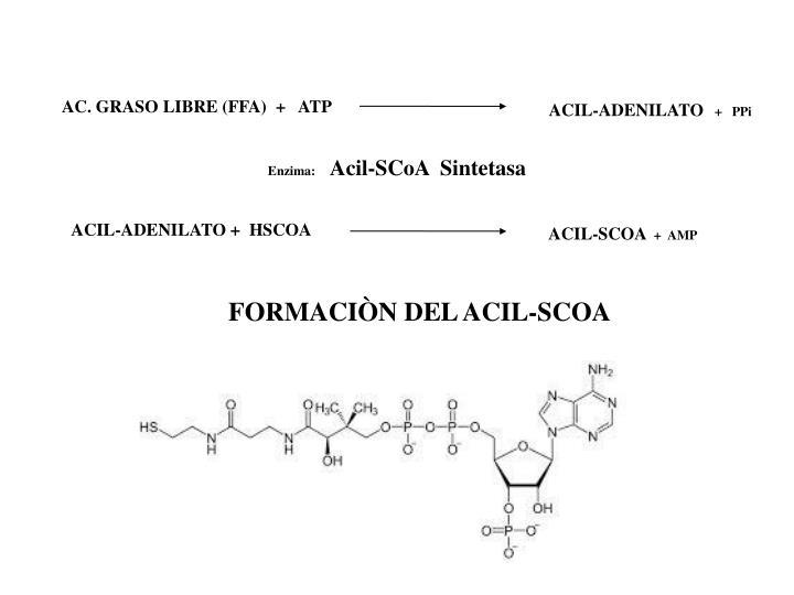 AC. GRASO LIBRE (FFA)  +   ATP