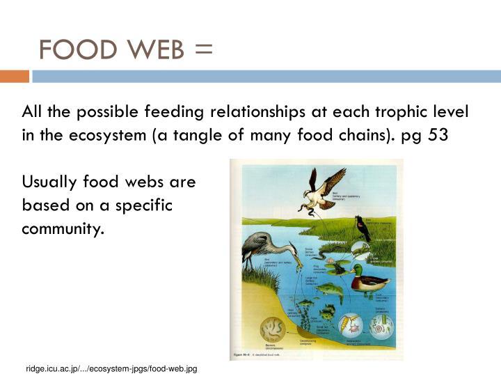 FOOD WEB =