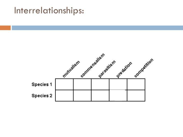 Interrelationships: