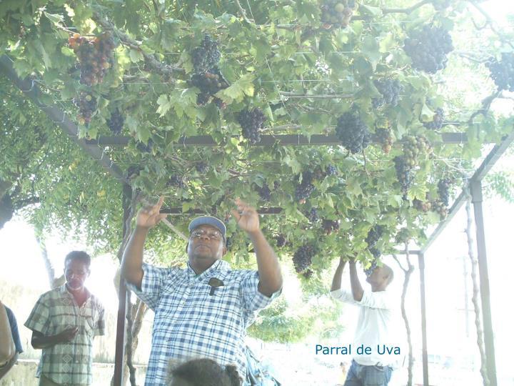 Parral de Uva