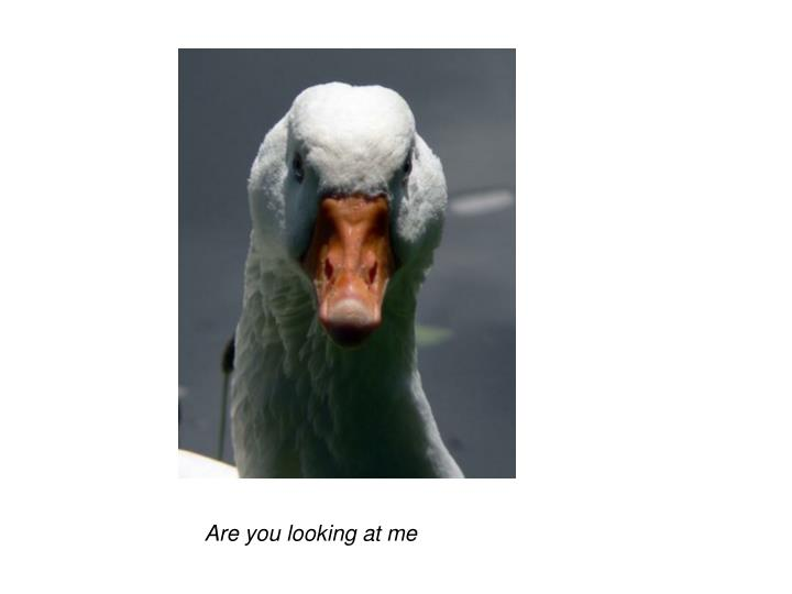 Are you looking at me