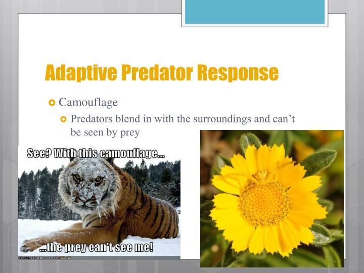Adaptive Predator Response