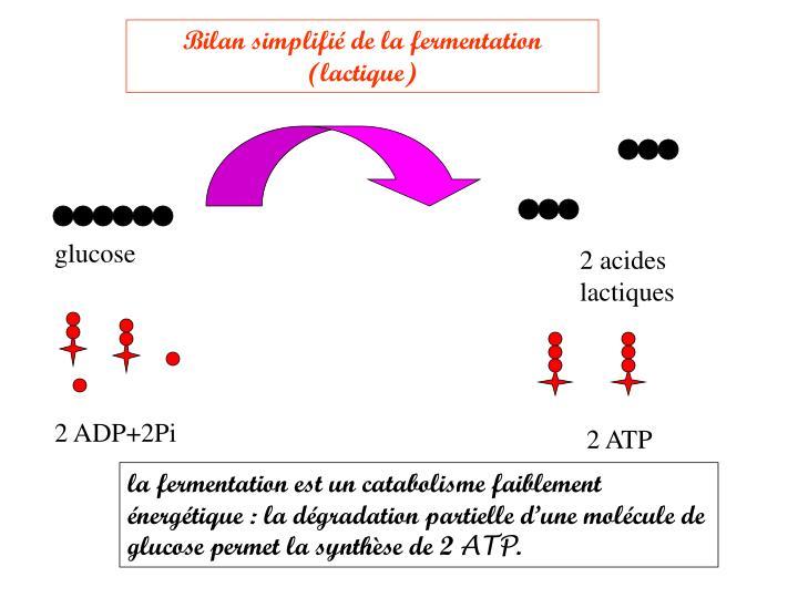 Bilan simplifié de la fermentation (lactique)