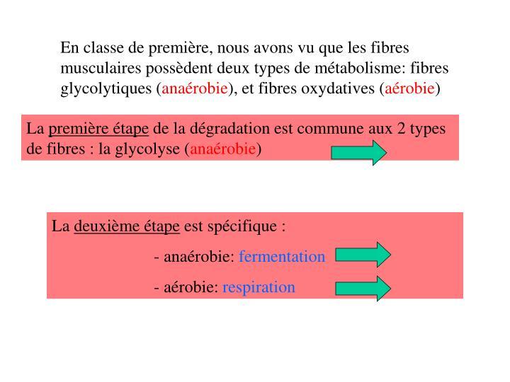 En classe de première, nous avons vu que les fibres musculaires possèdent deux types de métabolisme: fibres  glycolytiques (