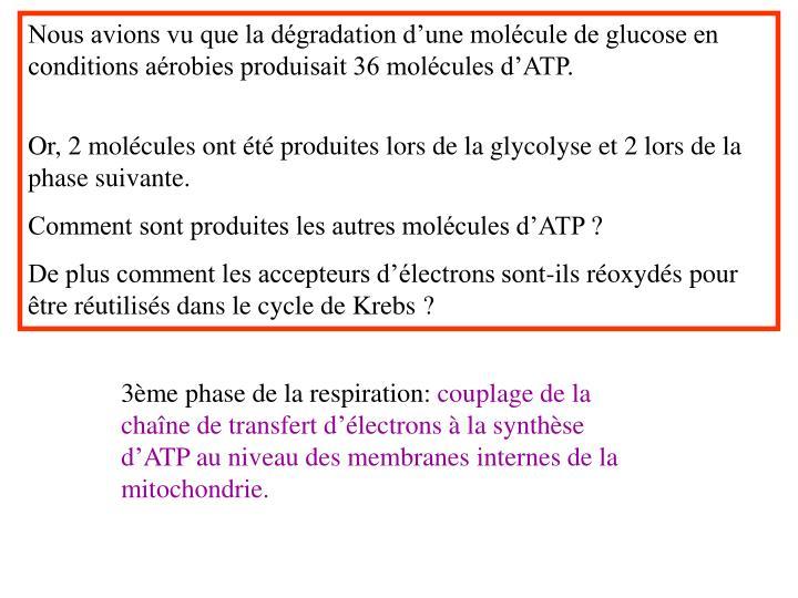 Nous avions vu que la dégradation d'une molécule de glucose en conditions aérobies produisait 36 molécules d'ATP.