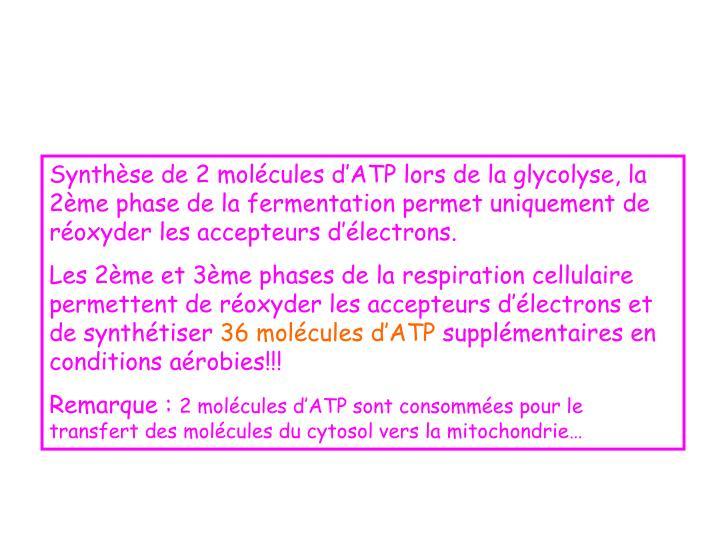 Synthèse de 2 molécules d'ATP lors de la glycolyse, la 2ème phase de la fermentation permet uniquement de réoxyder les accepteurs d'électrons.