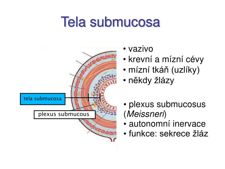 tela submucosa